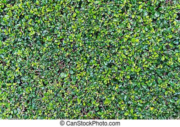 parete, foglie, su, sfondo verde, chiudere