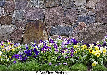 parete, granito, viole pensiero