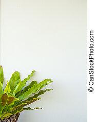 parete, pianta, verde bianco