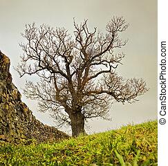 parete, pietra, albero