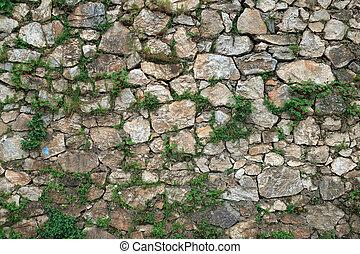 parete, pietra, coperto, edera
