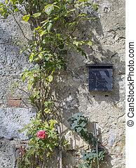 parete, pietra, vite