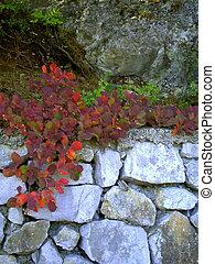 parete, trattenendo, pietra, parco, paesaggio