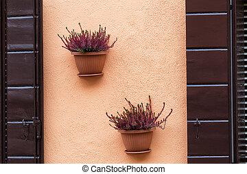 parete, vaso, fiori, due