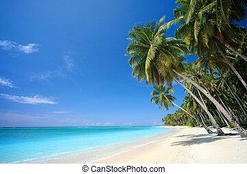parfait, île tropicale, plage, paradis