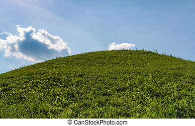 parfait, bleu, herbe, champ ciel