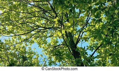 parfait, ensoleillé, sommet, arbre, incandescent, jour