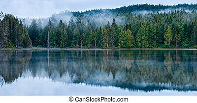 parfait, forêt brumeuse, lac reflet