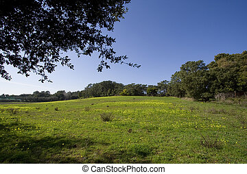 parfait, paysage vert