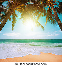 parfait, plage tropicale, scène