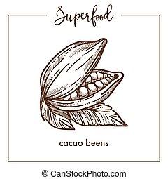 parfumé, croquis, naturel, superfood, sépia, cacao, haricots, monochrome
