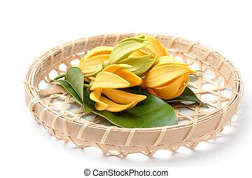 parfumé, ylang-ylang, fleur, jaune, nature, fond, fleur