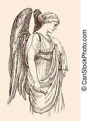 parirus., ange