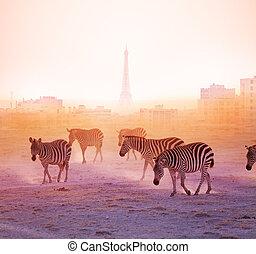 paris, marche, groupe, zèbres, fond