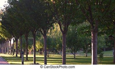 Park alley in summer. Green trees near pavement. Fresh air...