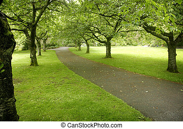 park alley - view of a park alley in vancouver