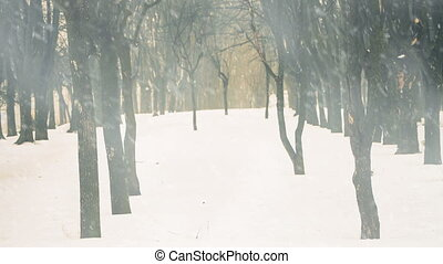 empty park alley with trees under falling snow