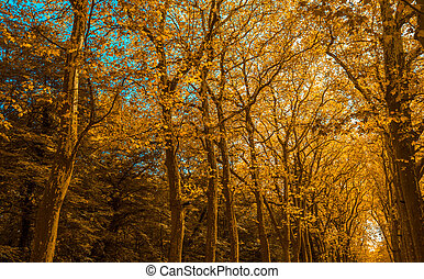 Park alley with trees in autumn color