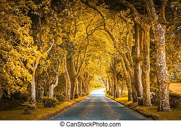 Park alley with trees in autumn colours