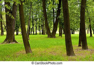 Park at summer day.