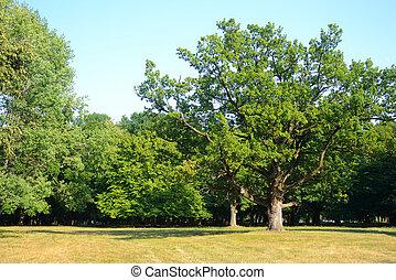 Park at summer.