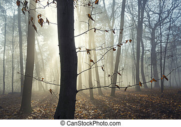 park., automne