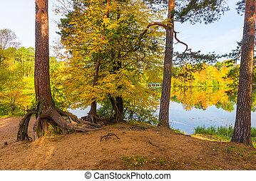 Park autumn landscape, trees on the shore of a picturesque lake