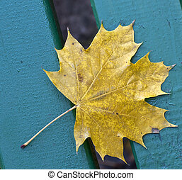 Park bench and yellow leaf in autumn close up