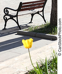 Park bench and yellow tulip