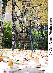bench in the autumn fallen leaves