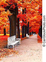 Park bench in the park in fall time