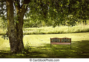 Park bench under tree - Bench under lush shady tree in...