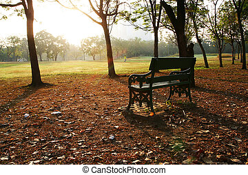 Park Bench with Trees and Grasses