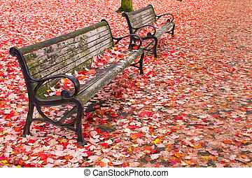 Park Benches in the Fall