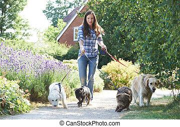 park, dog, het uitoefenen, walker, professioneel, honden