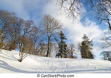 park., ensoleillé, paysage hiver, jour
