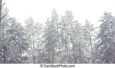 park., forêt, chute neige