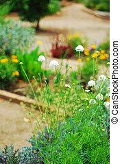Park, garden, plants