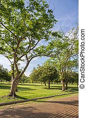 park, gras, grünes feld