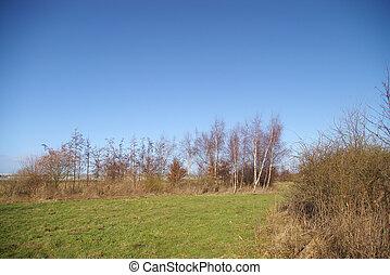 Park grass in winter