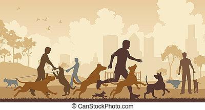 park, hund