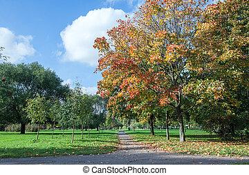 Park in autumn season with yellow, orange foliage