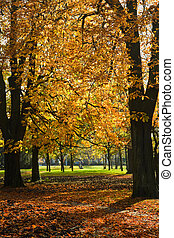 Park in autumn with Chestnut trees