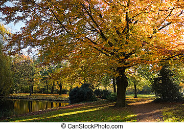 Park in autumn with golden beech tree
