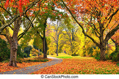 Park in autumn with pleasant colors