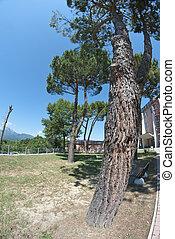 Park in Barga, Italy