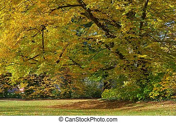 park in fall 01