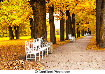 Park in fall time