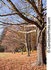 park in late autumn
