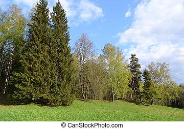 Park in Pavlovsk.